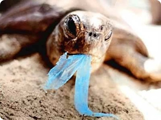 turtle eating plastic