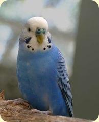 bird_2171