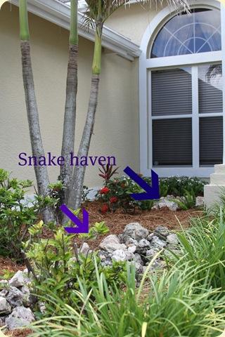 Snake haven