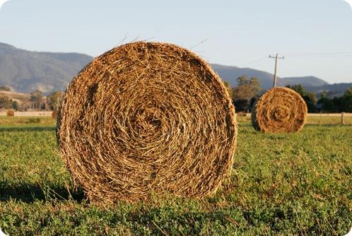 Round_hay_bale_at_dawn