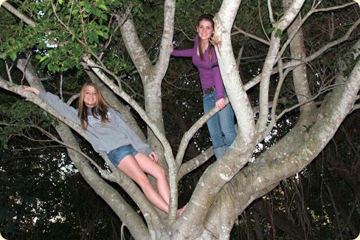 treemonkies-3